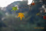 GARDEN (3) : Leaves & Sunshine ( Four Seasons of Taiwan )