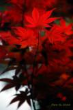 GARDEN (5) : Varied  Leaves ( Taiwan )
