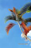 GARDEN (8): Palm Tree (Taiwan)