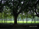 Scenery and Nature (4):Wonderful Green(Taiwan)