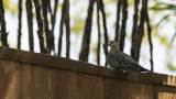 Bird Watching 2012