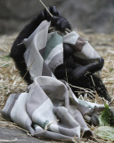 Lowland Gorillas and Friends at the Franklin Park Zoo in Boston