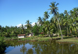 Tropical scenery shot from train
