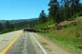Southwest Colorado Cowboys