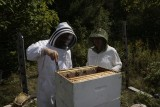 Aug 27th, bees