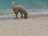 The Digger - Jack's Shack's dog Topher