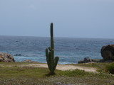 A scenic cactus along the water