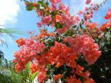 The island has some lovely flowers