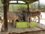 The residents of the Donkey Sanctuary