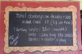 Some donkey facts on the board at the Donkey Sanctuary