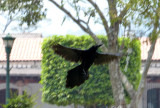 A cool crow picture!