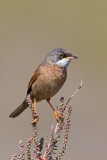 Birds of Cyprus