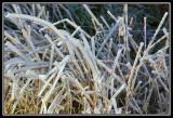 Arbustos helados  -  Frozen shrubs