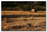 Campo recien segado  -  Reaped wheat field