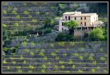 Bancales  -  Terraces