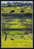 Vista verde  -  Green landscape