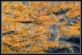 Liquen sobre piedra  -  Lichen on a stone