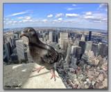 New York attitude is everywhere