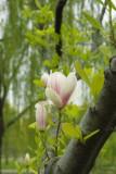 Tree_flower.jpg