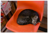 Cat - &#21941;&#21941; >(^-^)<