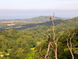 Philippine Serpent-Eagle (Spilornis holospilus, a Philippine endemic)   Habitat - Forest from lowlands to over 2000 m.   Shooting info - Elev. 125 m ASL, Bacsil, San Fernando, La Union, October 18, 2011,  Nokia N97 celfone camera at full digital zoom,1/1000 sec, f/2.8, ISO 100, 5.4 mm, hand held, uncropped full frame.