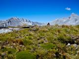 25. Alpine meaow.jpg