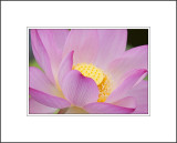 A Glowing Lotus