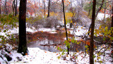 leaves snow and flooded stream.jpg