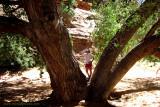 Big tree near our Primitive camp, Moab Utah