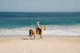 Los Cabos Beach Horseback Rider