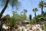 Todos Santos Cactus Garden