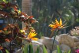 Resort Flowers