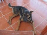 Cabo Pulmo Perro