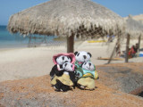 The Pandafords at Cabo Pulmo