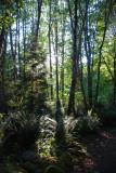 Belknap Springs Garden Path