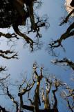 Marina Tree