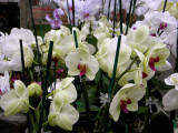 Farmers Market Orchids