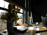 Rose's Desk