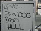 Love is a Dog from Hell