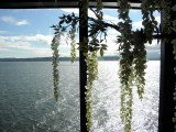 MS Westerdam Glass Elevator Lido Deck View