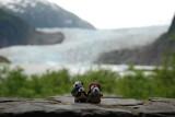 The Pandafords Visting Mendenhall Glacier