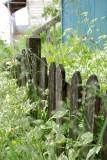 Sitka fence