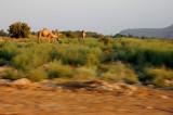 The Dead Sea and Negev Desert