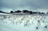 Frozen Potato Field