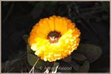 Abha_042011.jpg