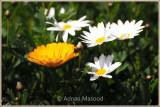 Abha_052011.jpg