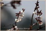 Abha_092011.jpg