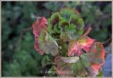 Leaves_012011.jpg