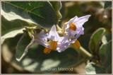 Spring_110404.jpg