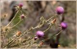 Spring_110406.jpg